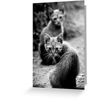 OnePhotoPerDay Series: 201 by L. Greeting Card