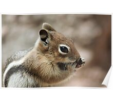 Golden Mantled Ground Squirrel  Poster