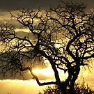 Golden african sunset by jozi1