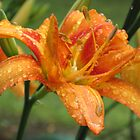 Day Lily After the Rain by teresa731