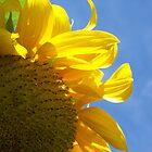 Sunny Sunflower by Jess Mo