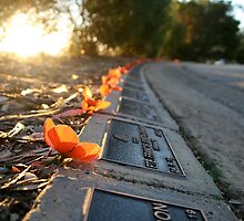 Remembering the Fallen, Albury by Ashlee Betteridge