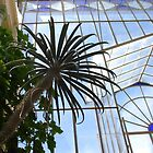 Palms and Glass by Ellanita