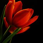 The Tulips * Wall Art by AnaCBStudio