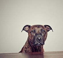 The boy. by ruthlessphotos