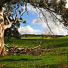 Adelaide Hills I by Briony  Williams Photography