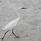 Snowy White Egret  by Missy Yoder