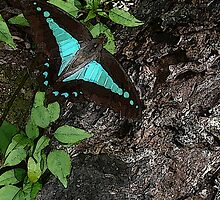 Rainforest 2 Butterfly by Leonie Mac Lean