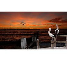 Pelican Sunset Photographic Print