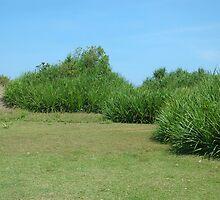 meadow by bayu harsa