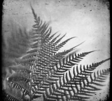 fern by Andrew Bradsworth