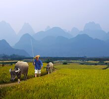 HEADING HOME - LI RIVER by Michael Sheridan