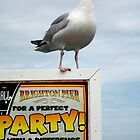 Brighton Party Gull by sionii