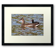Birds on Bright Water: Juvenile Moorhen and Chick Framed Print