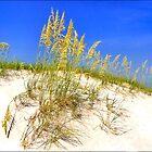 Beach Dune at Clearwater Beach, Fla by Robert Azmitia
