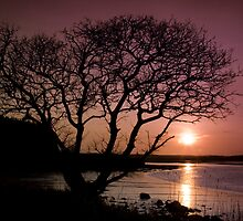 Purple sunset with tree and lake by Gabor Pozsgai
