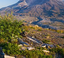 Returning Life (Mount St. Helens) by RavenFalls