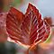 New Leaves by Indrani Ghose