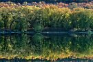 Susquehanna River Shoreline In Reflection by Gene Walls