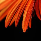 Orange on Black by Ingz