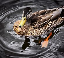 u quack me up by SNAPPYDAVE