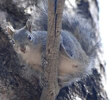 Squirrell Gymnastics by down23