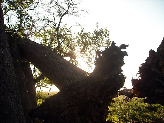 Uprooted Ancient Tree by Keith Stephens