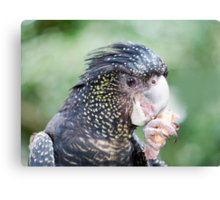 Eating Peanuts - black cockatoo Canvas Print
