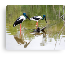 Double trouble - Jabiru Canvas Print
