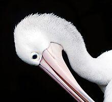 Curves - pelican portrait by Jenny Dean
