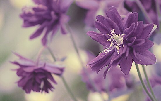 Vintage Purple by Anne Staub