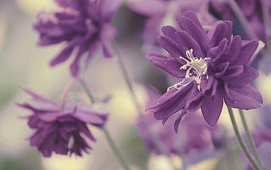 Vintage Purple by Anne Staub