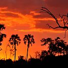 Okavango Sunset by Sharon Bishop