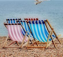 Deckchair Gull by Karen Martin IPA