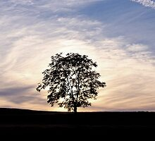 Evening tree by Debbie Ashe