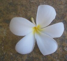 Plumeria in Hawai'i by paintbrush