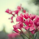 Pink Oleander by Stephanie Newton
