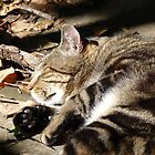 Sunbathing cat by solena432