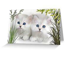 Kittens ..  Greeting Card