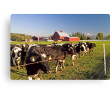 Dairy Cattle, Red Barn and Mount Rainier Canvas Print