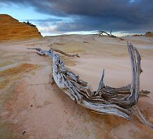 The Gnarled & Colourful World of Mungo by David  Hibberd