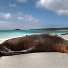Galapagos Sea Lions I by Paul Duckett