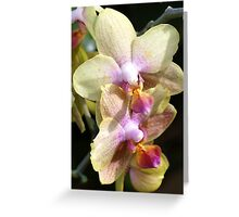 Greetings with orchid flowers Greeting Card