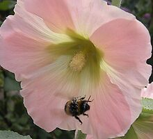 Flight of the Bumble Bee 2... by supernan
