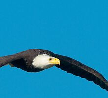 Soaring with Eagles by David Friederich