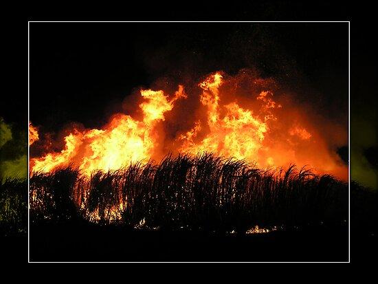 Fiery Night I by Tanya Rossi