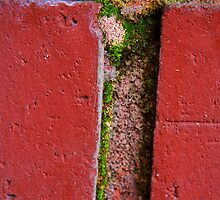 Life Between the Bricks ( color enhanced) by heatherfriedman