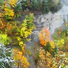 Autumn on the Canyon Wall by Ned Elliott