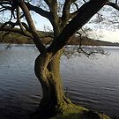 Rudyard lake tree by Kevin McNeill