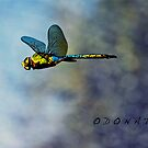 The Dragonfly... by Karen  Helgesen